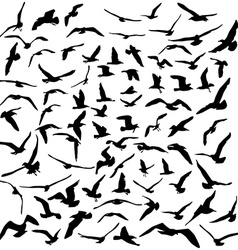 Seagulls black silhouette on white background vector image vector image