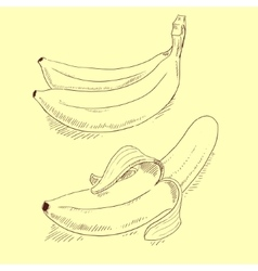 Banana sketch vector