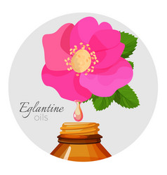 Eglantin oils promo poster with wild rose flower vector