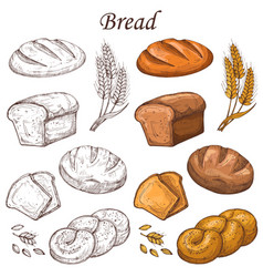 Line and colored bakery elements loaf vector