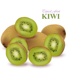 Realistic kiwi isolated on white vector