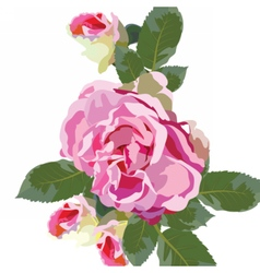 Vintage Watercolor Pink Rose flowers isolated vector