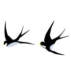 swallow birds vector image vector image