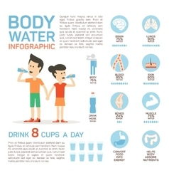 flat style of body water infographic vector image vector image