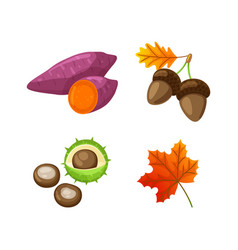 Autumn food beetroot and acorn isolated vector