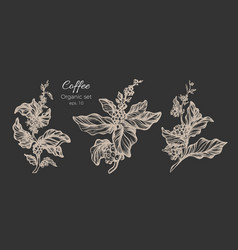 set coffee branch sketch dark vector image