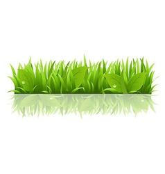 Grass And Leafs vector image vector image