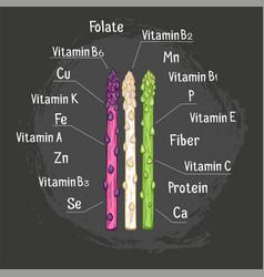 Organic asparagus with micronutrient hand drawn vector