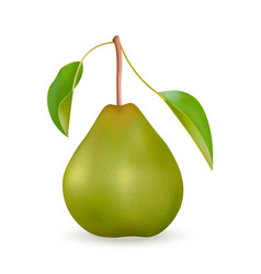 Realistic green pear vector