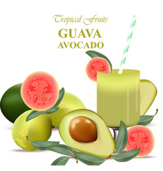 smoothie guava and avocado fruits realistic vector image