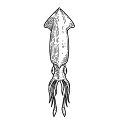 squid in engraving style design element vector image