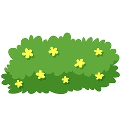 Bush with yellow flowers vector image