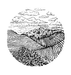 Hand drawn coffee field nature landscape in the vector