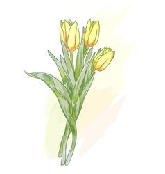 bouquet of tulips watercolor vector image