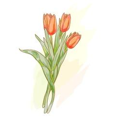 bouquet tulips vector image