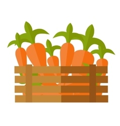 Fresh Carrot at the Market vector image