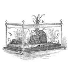 Freshwater aquarium vintage vector