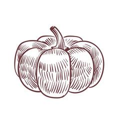 hand drawn pumpkin detailed organic product vector image