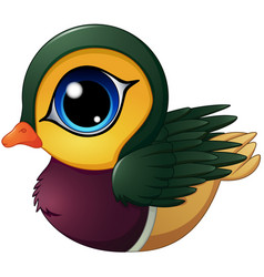 Mandarin duck cartoon vector