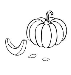 Pumpkin or squash outline vector