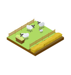 Sheep breeding on ranch isometric 3d element vector