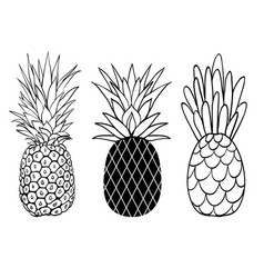 set of three pineapple fruit styles summer vector image vector image