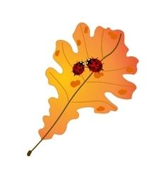 Two cute ladybugs on autumn oak leaf vector image
