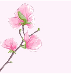 background with twig blossoming magnolia tree vector image