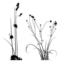 black and white plants silhouettes collection for vector image