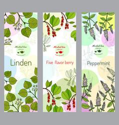 Herbal tea collection linden five-flavor berry vector