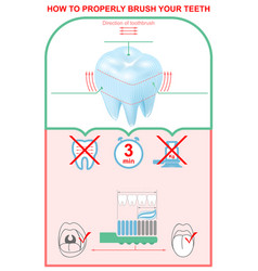 how to brush your teeth properly education vector image