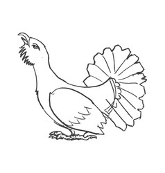 Sketch grouse bird vector
