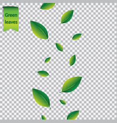 summer concept with flying green leaves foliage on vector image