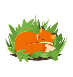 cartoon style of sleeping fox vector image vector image