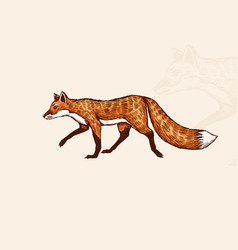 fox with a fluffy tail forest animal or ginger vector image