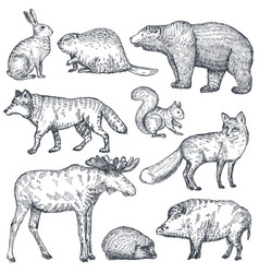 set hand drawn animals europe vector image