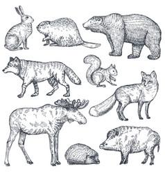 Set hand drawn animals europe vector