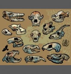 animal skulls vector image vector image