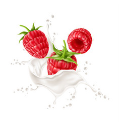3d raspberry in milk splash realistic vector image