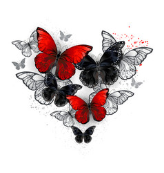 Realistic black and red morpho vector