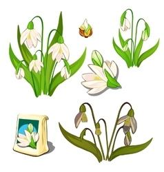 Seeds stages of growth and wilting white flowers vector