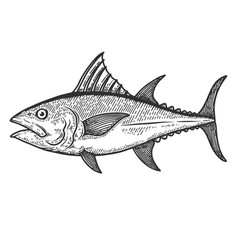 Tuna fish in engraving style design element vector