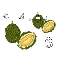 Chinese green spiky durian cartoon character vector image vector image