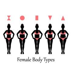 female body types vector image