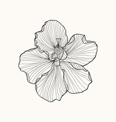 Hibiscus flower top view line pattern Coloring boo vector image vector image