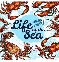 sea life poster of fish sketch ocean vector image