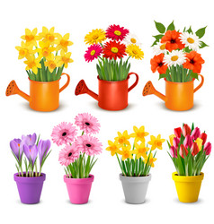 spring and summer colorful flowers in pots vector image vector image