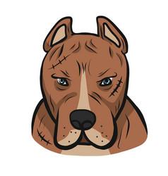 American pit-bull dog face cartoon vector