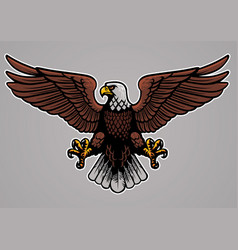 bald eagle spread his wings vector image