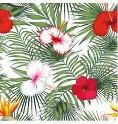 Bird paradise multicolor hibiscus green plants vector